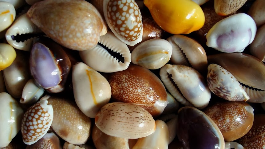 Symbolism the cowrie shell everything soulful undefined cowieshell cowrie publicscrutiny Image collections