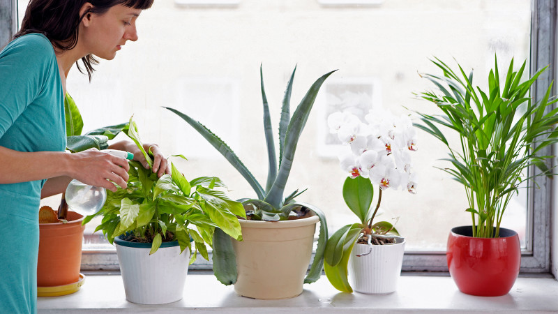 houseplants - clean air at home