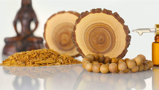 Sandalwood: Ancient Healing Oil