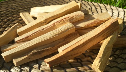 HOLY WOOD: Uplifting Properties of Palo Santo