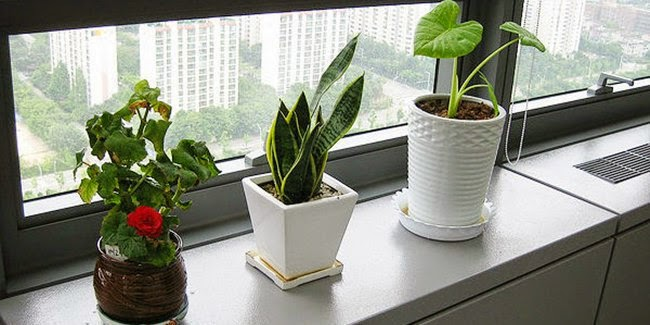 everything_soulful_office_plants_1