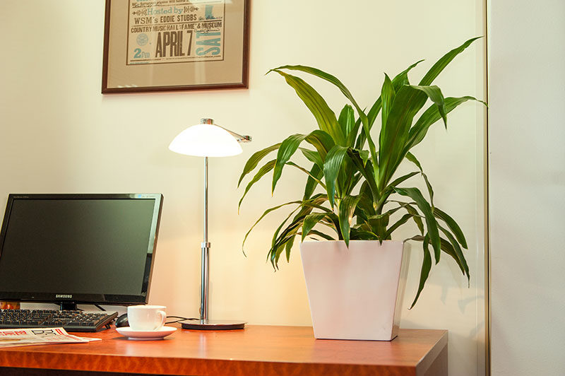 everything_soulful_office_plants_2