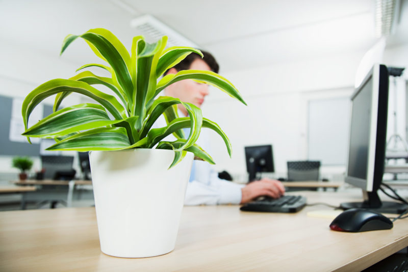 everything_soulful_office_plants_4
