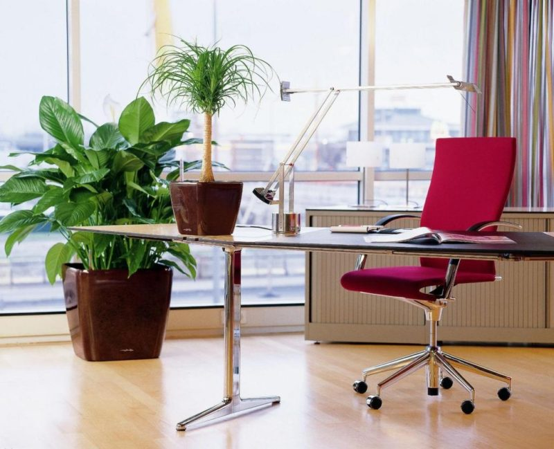 everything_soulful_office_plants_6