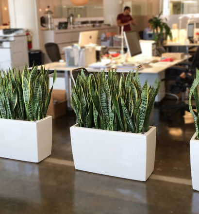 everything_soulful_office_plants_7