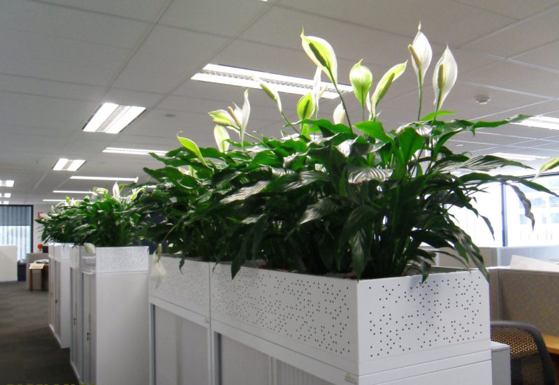 Everything_soulful_office_plants_main. Adding Plants To Your Office ...