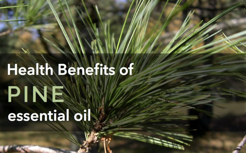 Everything_Soulful_Pine_health_Benefits
