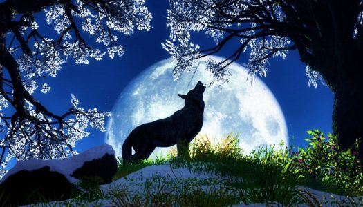 Symbolism of January's Wolf Full Moon