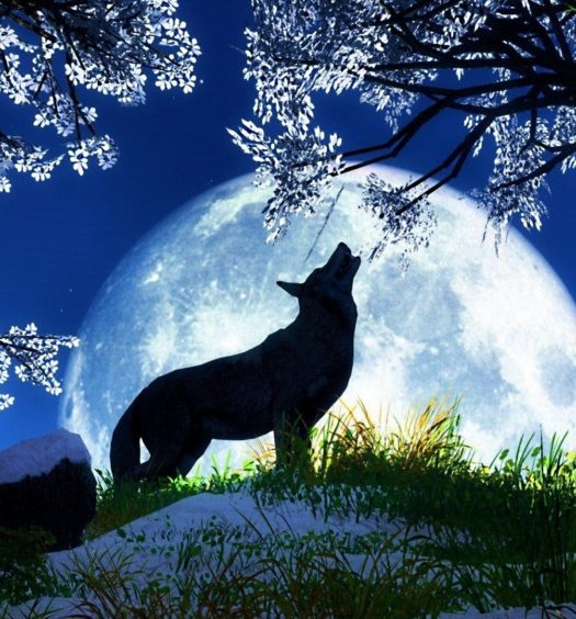 everything_soulful_wolf_moon