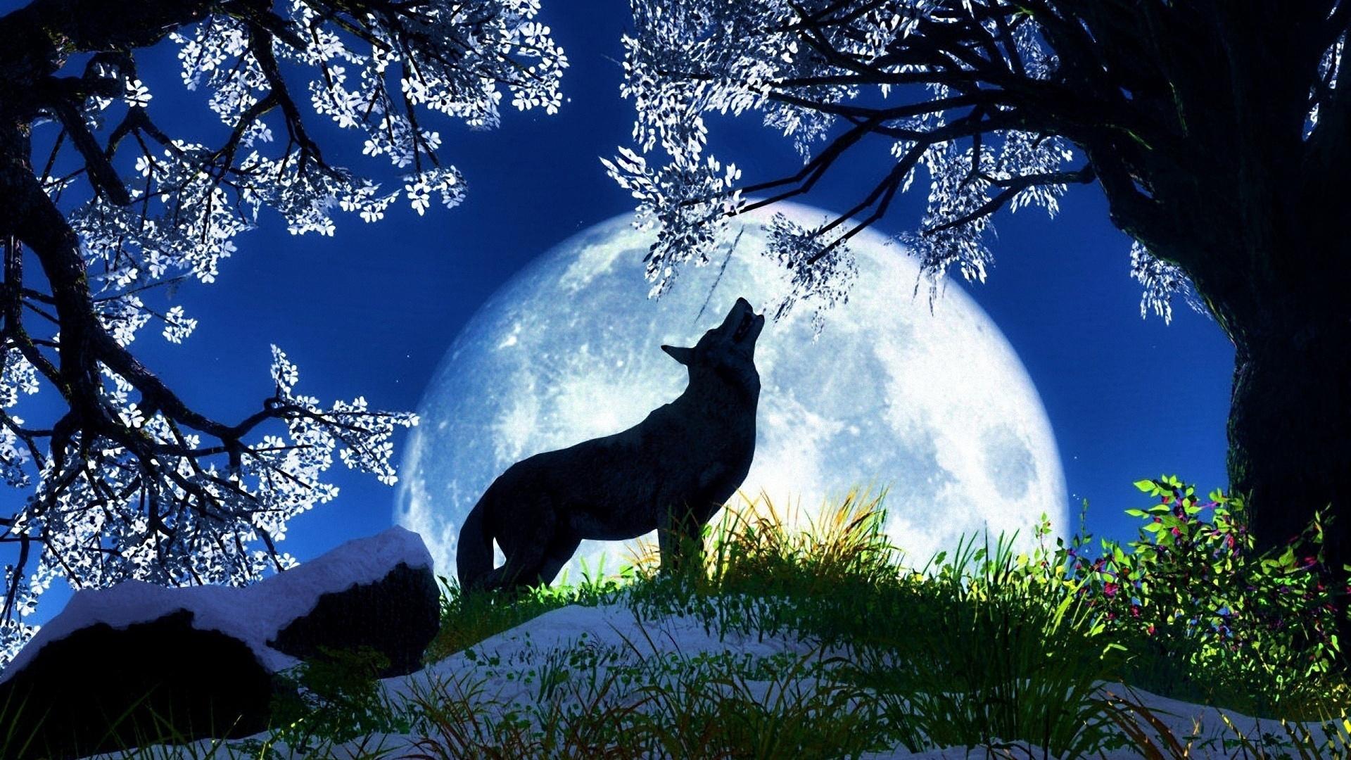 Symbolism Of Januarys Wolf Full Moon Everything Soulful