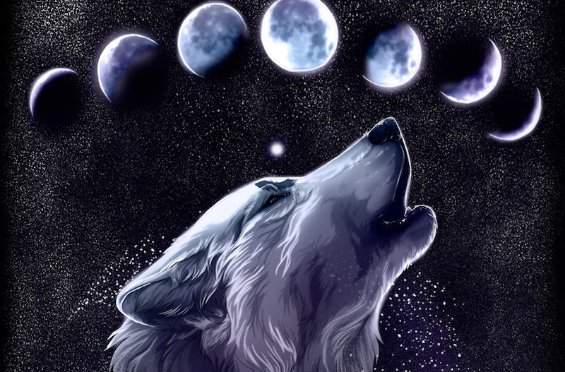 Symbolism of January's Wolf Full Moon | EVERYTHiNG SOULFuL