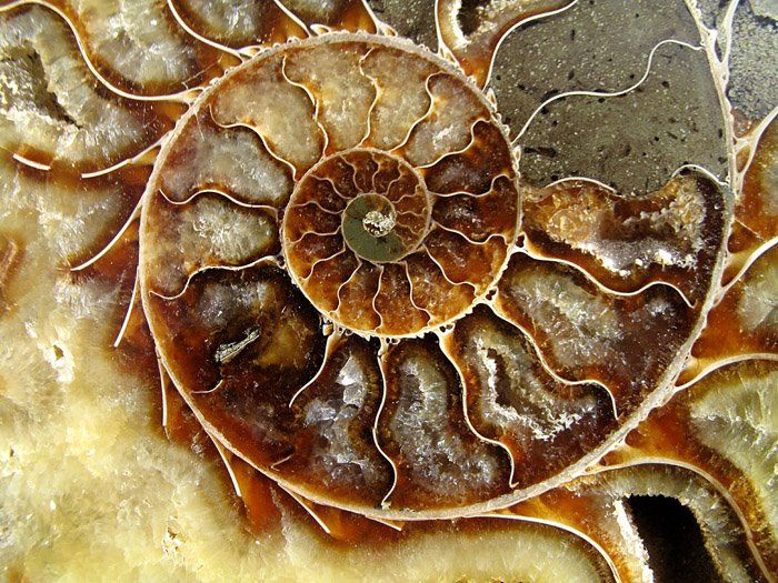 Everything_Soulful_Ammonite_2