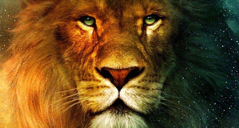 Everything_Soulful_Animal_Spirit