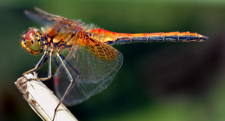 Everything_soulful_dragonfly_animal_spirit