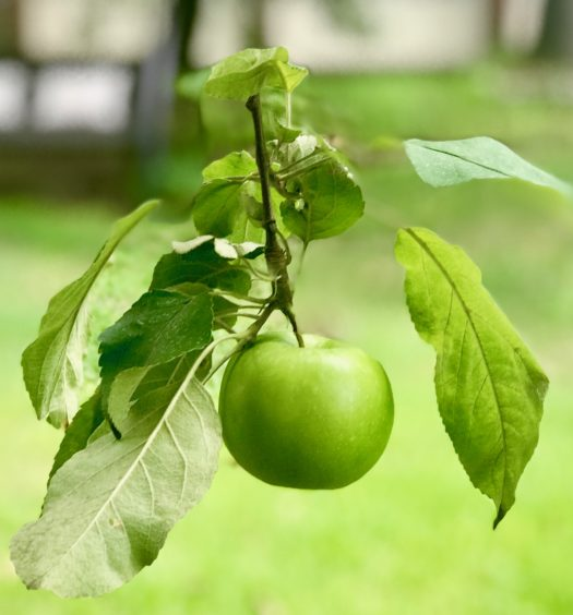 Everything_soulful_Green_Apple_for_The_Heart