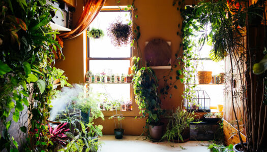 Indoor Plants that Make You Feel Good