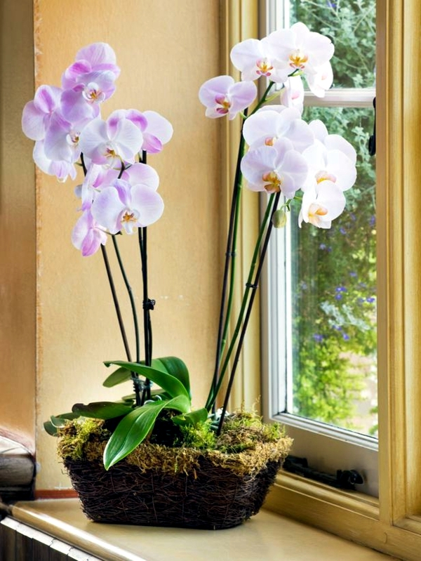 everything_soulful_Positive_energy_Plants_orchid